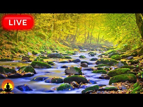 🔴 Relaxing Music 24/7, Sleeping Music, Relaxation, Calming Music, Deep Sleep Music, Study Music