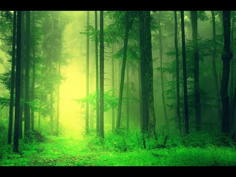 Relaxing Sleep Music: Deep Sleeping Music, Beat Insomnia, Relaxing Music, Sleep Meditation