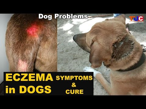 ECZEMA in Dogs : Symptoms & Cure : Dog Diseases : TUC